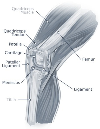 Knee Pain Diagram 2