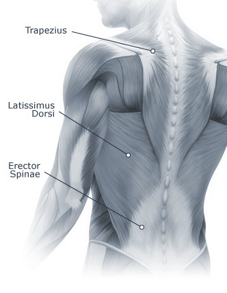 Spine (Neck & Back Pain) Diagram